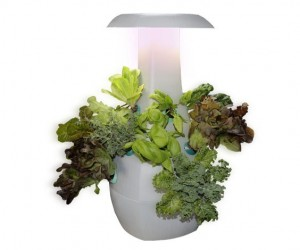 ROOT: Countertop Gardening Device