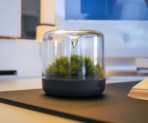 Sanctuary: Little Mossarium Brings a Slice of Natural Haven Indoors