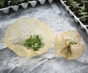 Scoby: Edible, Plastic-Free, Kombucha Packaging