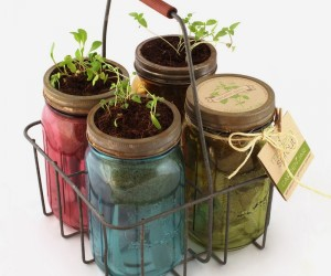 Self-sustaining glass jar herb kit