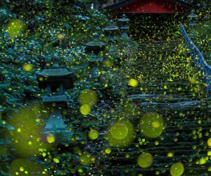 Skilled Photographers Capture Japans Gorgeous Summer Firefly Phenomenon