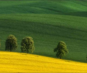 Spring in South Czech Republic by Vlad Sokolovsky
