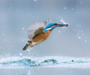 Stunning Finalists Of The World Wildlife Day Photography Competition