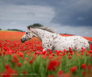 Stunning Horse Portraits by Wiebke Haas
