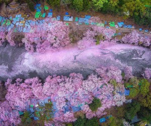 Stunning Photos of Japans Cherry Blossom by Nationwide Geographic