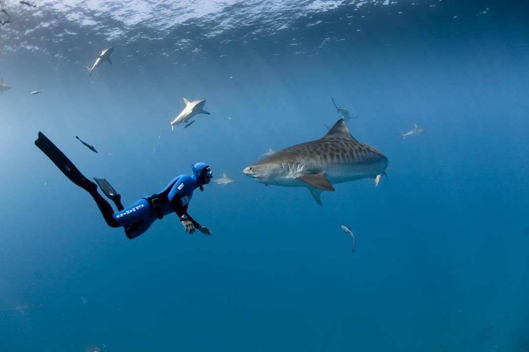 Stunning Underwater Instagrams By Fred Buyle