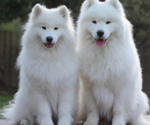 The 10 Most Ancient Dog Breeds Around The World
