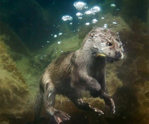 The 20 Most Incredible Photos of Living Creatures From 2013