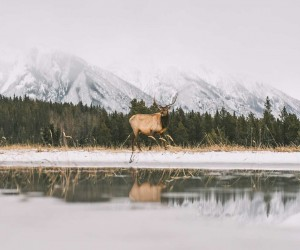 The Beauty of Canadian Nature by Morgan Phillips