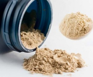 The best wholesale protein powder online
