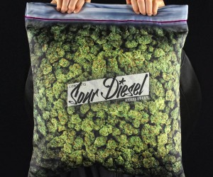 The Giant Stash Pillowcase by Steelplant