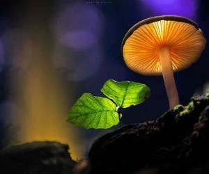 The Mystical World Of Mushrooms by Martin Pfister
