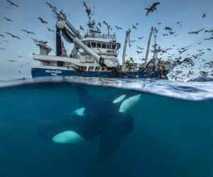 The Wildlife Photographer of the Year 2016 Shortlist