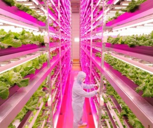 The Worlds Largest Indoor Farm Using LED Lights, Japan