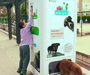 This Amazingly Clever Device Helps Stray Dogs and Protects Our Earth