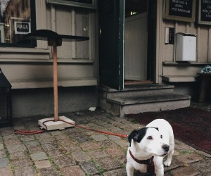 This Instagram Documents Dogs Waiting Outside For Their Owners All Around The World