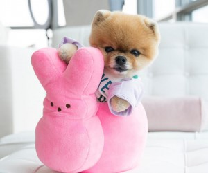Top 10 Dogs You Should Be Following on Instagram