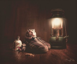 Tracy Willis Uses Photoshop to Create Surreal Photos of Her Pets
