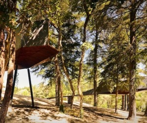 Tree Snake House by RA Architecture