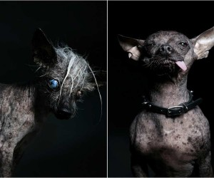 Ugly Dogs by Ramin Rahimian