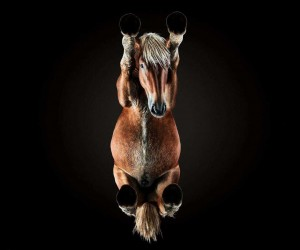 Under Horse: Andrius Burba Captures The Unseen Underside of Horses
