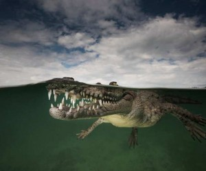 Underwater Photography by Matty Smith