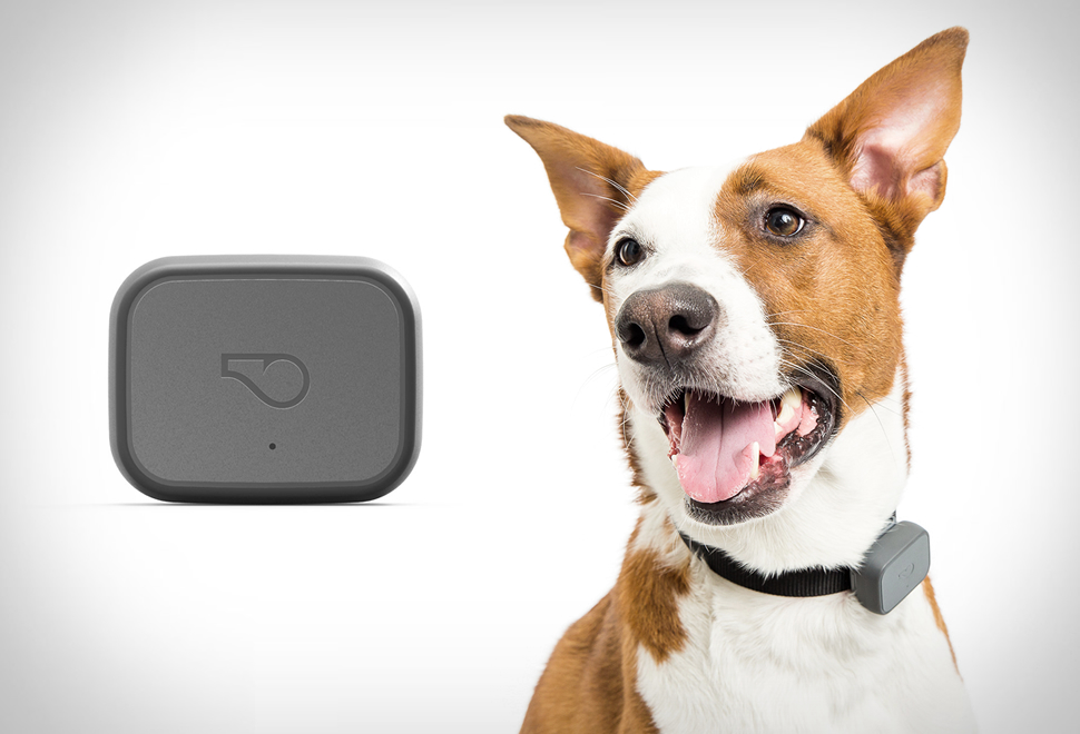 whistle gps pet tracker