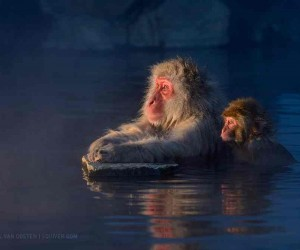 Wild Animals Photography by Marsel van Oosten