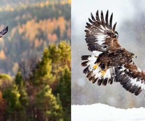 wildbirds: Fantastic Birds Photography by Konny Lundstrm