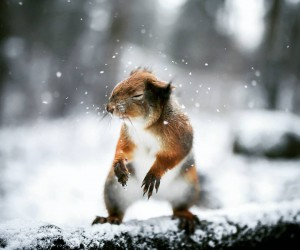 Wildlife Finland: Dreamlike Animal Portraits by Joachim Munter