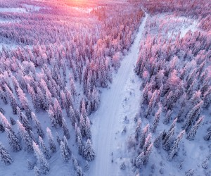Winter Forest of Finish Lapland From Above by Tiina Trmnen