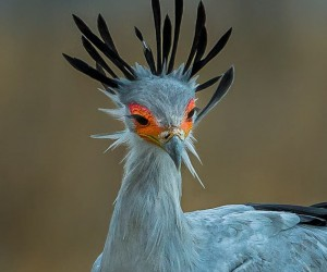 Wonderful Bird Photography by Jainy Maria