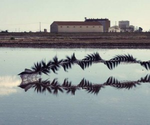 Xavi Bou Captures The Flight Patterns of Birds