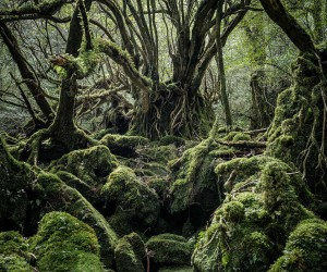 Yakushima - The Forest Spirit: Landscape Photography by Raphael Olivier