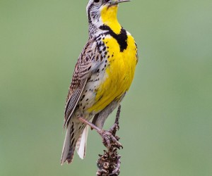 your_best_birds: Beautiful Birds Photography by Brian Genge